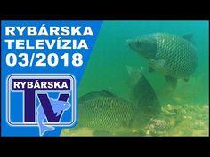 Rybárska Televízia 3/2018  - relácia pre rybárov o rybách a rybolove Fish, Pets, Animals, Animales, Animaux, Animal Memes, Animal, Animais, Dieren
