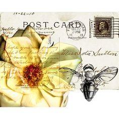 Bees, Butterflies, And Postcards Yellow 20x24 Giclee Canvas Art Classics Ltd Wall Art Wall