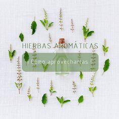 5 formas de aprovechar las hierbas aromáticas | Blog Café largo de ideas