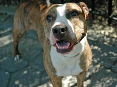 Manhattan NY.  Bundles.  Male.  2 yrs.   Dies in a.m.  See Urgent Part 2 on fb.***RESCUED***
