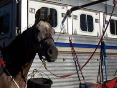 Spring Tie/Ride N Tie overhead tie that allows horse to lie down for overnight tying on the trailer when camping.