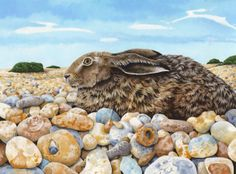 Pebble nest, by Emily Autumn Goddard. Painting of a hare down at Dungeness, yes they really do live among the pebbles. Can you see how many hares are in the painting?