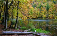 Free Photos, River, Outdoor, Outdoors, Outdoor Living, Garden, Rivers