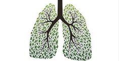 Lo sapevi che puoi ripulire i polmoni ed aiutare il sistema respiratorio con le erbe?Ecco quali