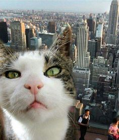 Selfie with a view ... or photobomb?