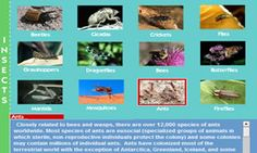 Science Topics for Kids in Elementary and Middle School « Science Topics, Science Activities, Insects For Kids, Insect Activities, Education Major, Interactive Map, Middle School, Anatomy, Holidays
