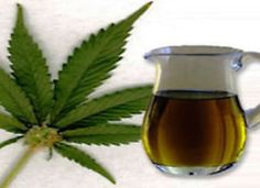 Cannabis oil has now healed many serious conditions (epilepsy, MS, cancer) and is gathering an unstoppable momentum as a brilliant natural cure and remedy. Medical Cannabis, Cannabis Oil, Cbd Hemp Oil, Oil Benefits, Natural Health Remedies, Hemp Seeds, Natural Medicine, Health And Beauty, Herbalism