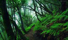 "Jungle Path - <a href=""http://instagram.com/kilianschoenberger/"">@kilianschoenberger I N S T A G R A M</a>  Canary Islands, Spain  <a href=""https://www.facebook.com/pages/Landscape-Photography-by-Kilian-Schoenberger/304631876263547"">L A N D S C A P E   P H O T O G R A P H Y facebook</a>"