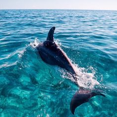 Delfin in the ocean !you can see in the sea Cute Baby Animals, Animals And Pets, Beautiful Creatures, Animals Beautiful, Majestic Animals, Beautiful Images, The Ocean, Ocean Life, Ocean Beach