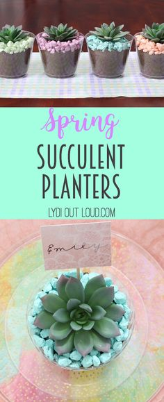 Beautiful colorful succulent planters - perfect to make place cards for a spring brunch! @mychinet #MyChinetParty ad