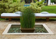 Planta aquática