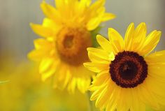 Blumen Bedeutung. Blumen sagen manchmal mehr als Worte - deshalb hat euch das mydays Magazin einen Überblick über die Sprache der Blumen zusammengestellt.