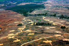 In pictures: Tarnished Earth - the destruction of Canada's boreal forest