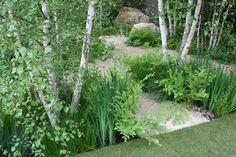 river birch landscaping design - Google Search