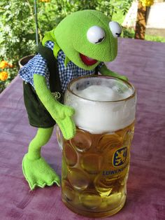 What a LUSH! Kermit drinks German beer in Munich, Germany #FunWithPinterest #humor #muppets