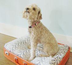 Vintage suitcase = Dog bed!