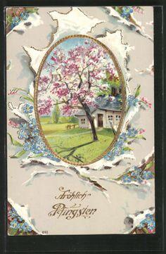 tolle AK blühender Baum vor einem Haus, Vergissmeinnicht, Pfingsten 1911 | eBay