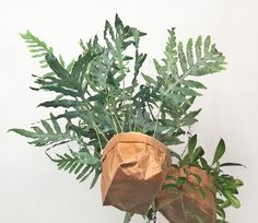 Wax Paper, Gift Store, Monochrome, Plant Leaves, Stationery, Japanese, Creative, Plants, Papercraft