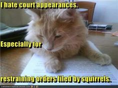 I hate court appearances. Especially for restraining orders filed by squirrels.