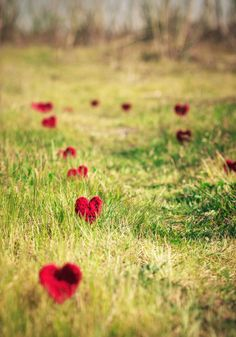 red hearts in the grass --- outdoor wedding décor?
