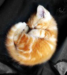Bundle of cute.