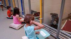 Schattig! Kinderen lezen voor aan asielhondjes om ze minder schuw te maken - HLN.be
