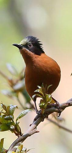 Γκέι μεγάλο πουλί εικόνες