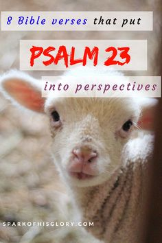 Psalm 23 is the most popular chapter in the bible. It is full of God's promises to you as a sheep in his fold. So I take it personal! Very personal! But I don't want it to be just a cliche! So I went digging for other verses that bring perspectives to Psalm 23! Be blessed as you read about the adventure of a sheep and his shepherd as narrated by the sheep.