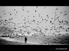 Olhares.com Fotografia   �SHADOW -NUNO SAMPAIO    procura...