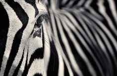 CREATURES I | Antti Viitala Photography - Art People Gallery