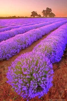 lindo jardins