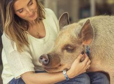 American Mini Pig Association was created to educate, advocate, protect miniature pigs, improve breeding practices. This Little Piggy, Little Pigs, Miniature Pigs, Pet Ramp, Cute Piglets, Pot Belly Pigs, Pig Farming, Mini Pigs, Cuddle Buddy