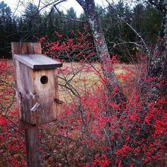 Plan Your Habitat Garden — First Light Wildlife Habitats