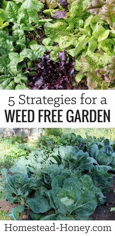Tired of spending your garden time pulling weeds? Try these 5 simple strategies for a weed free garden and enjoy beauty and abundance instead!   Homestead Honey