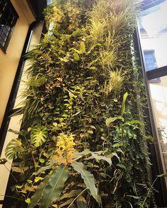 Som våra växtväggar har längtat efter solen. #brasseriemakalös #nästanvår #hotelkungsträdgården #verticalgarden #designhotel #boutiquehotel