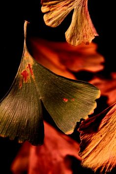 "Japanese poem Haiku by Izumi Shikibu (978~unknown) ""What color is / this blowing autumn wind, / that it can stain my body / with its touch."""
