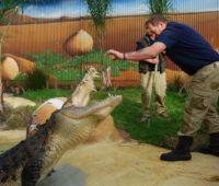 Crocodile Butterfly House, Tropical Birds, Salt And Water, Auckland, Farm Animals, Crocodile, New Zealand, Good Books, Creatures