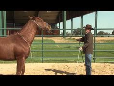"""Here's a video for gaining control and respect when on the ground. This something I am working on with our horse Abigail the mustang. When she spooks, she wants to run into my arms and have me protect her. I start waving my arms and saying """"whoa"""". But I'll admit, I've had to jump into the bushes cause I wasn't sure she'd stop. She's the sweetest horse, just a little scared of certain things. #clintonanderson #horsetraining #downunderhorsemanship"""