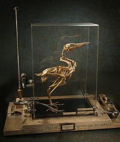 Ron Pippin, Bird Museum Box