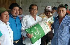 Política y Sociedad: JMM / Entrega oportuna de semilla a productores de...