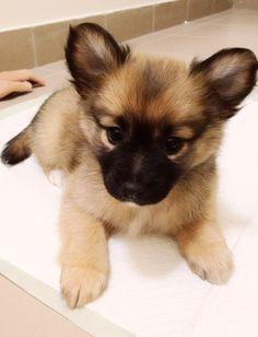 ears... so adorable!