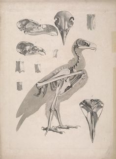 [Die vergleichende Osteologie /. Bonn :In Commission bei Eduard Weber,1821-1838.. biodiversitylibrary.org/page/40170752
