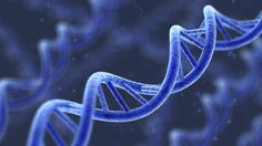 via NPR: Supreme Court Asks: Can Human Genes Be Patented?