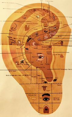 Mappa Auricoloterapia -Auriculotherapy Map