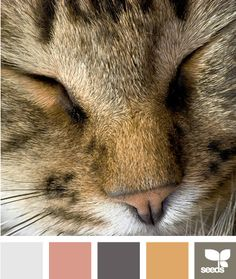 Our loving furry four legged friends are one of the best joys in our lives. If your furry best friend is the best thing in your life why not get inspired by their beauty color schemes