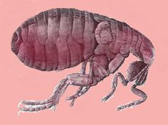 """Puce is the French word for """"flea"""".  The color really was named for the belly of a flea, and gowns of this rather unusual color were all the rage in Paris during the time of Marie Antoinette."""