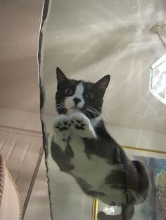 21 Pictures Of Cats On Glass - BuzzFeed Mobile