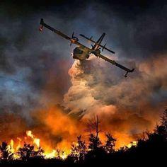 Fire flight: Snapper captures emergency aircraft soaring over blazing forest fires Fire Dept, Fire Department, Aigle Animal, Photo Avion, Wildland Firefighter, California Wildfires, Fire Equipment, Wild Fire, Fire Apparatus
