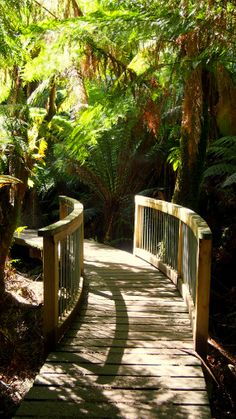 Maits Rest, Great Otway National Park