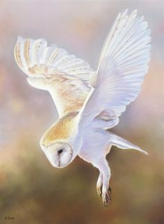 """Daily Paintworks - """"Barn Owl"""" by Annette Mckinnon Owl Bird, Pet Birds, Birds 2, Fly Drawing, Owl Wings, Owl Illustration, Owl Pictures, Spirited Art, Beautiful Owl"""